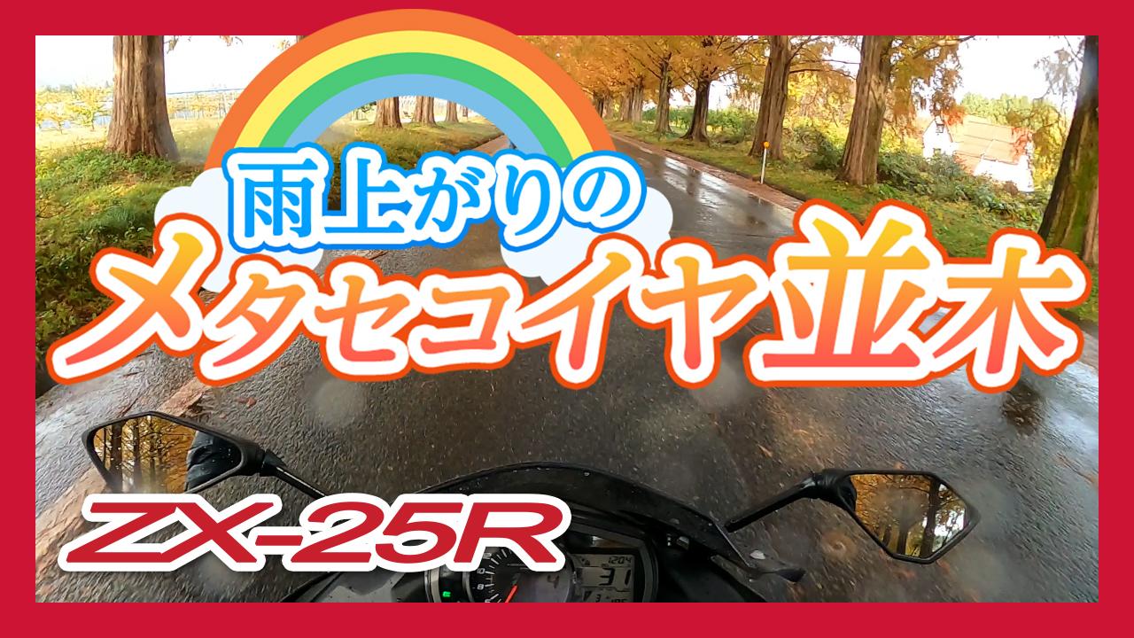 【ZX-25R】目的地直前で突然の雨!でもそのおかげでメタセコイヤ並木で絶景に出会えました