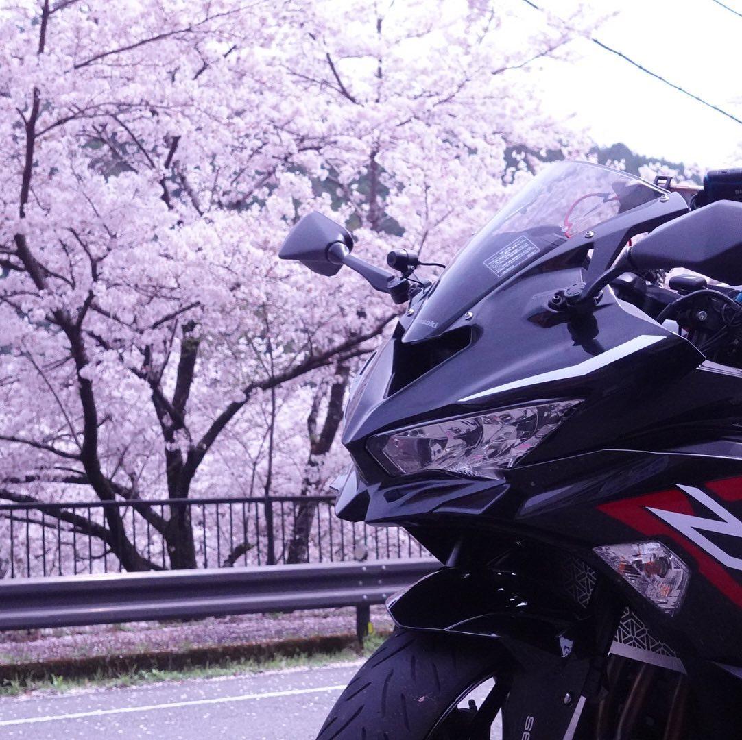 やっぱり桜いいよねーー#zx25r