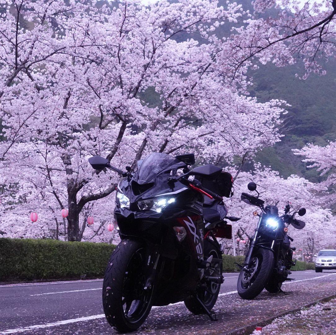 レブル1100の桜の写真あげてなかった!子分を引き連れてるみたい🤣