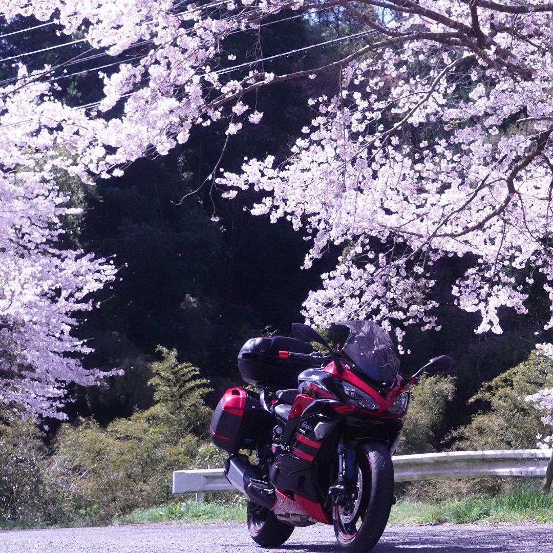 Ninja1000SXも桜撮って来たぞーー#ninja1000sx